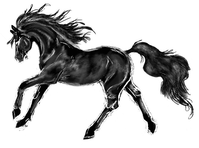 Black Stallion. fun. inspired i - sande2013 | ello